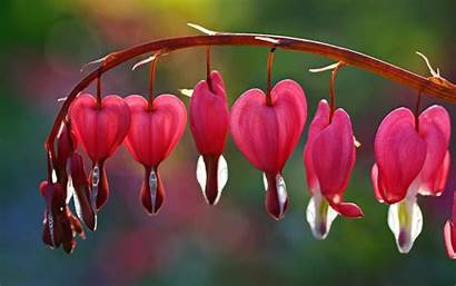 Broken Background Flowers Flower Heart Screen Pink
