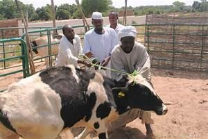 Sudan: ICRC vaccinates more livestock in Darfur - ICRC