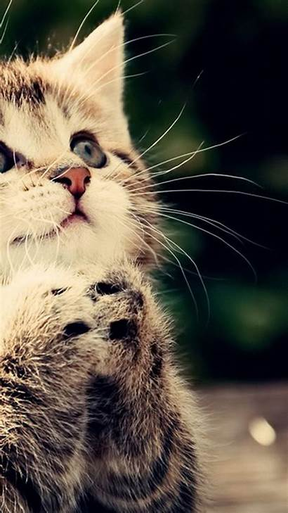 Cute Cat Cats Iphone Kitty Galaxy Wallpapers