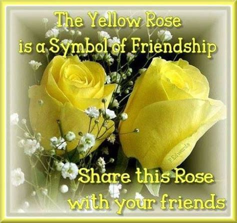 friendship rose quote pictures   images