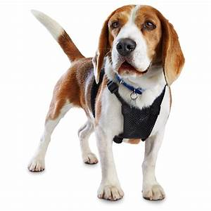 Good2Go Black No Pull Dog Harness | Petco