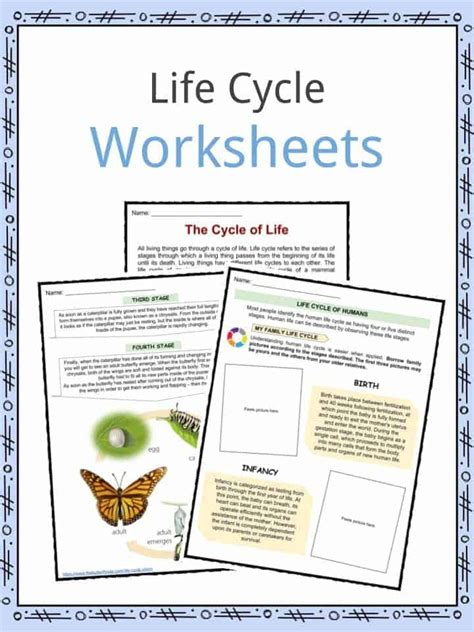 life cycle facts worksheets examples stages  life