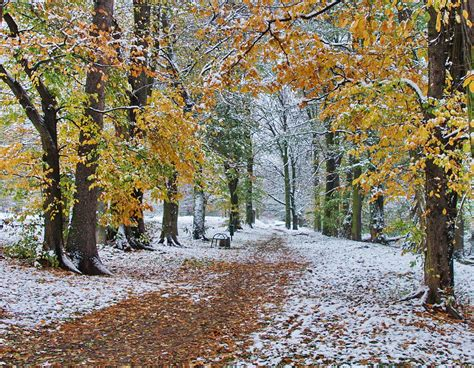 Between Fall And Winter By Starykocur On Deviantart
