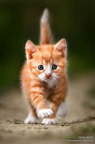 Show Me a Picture of a Cute Little Kitty Cat