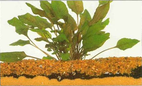 soilbased substrates aquarium plants gibell aquarium society