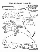 Florida State Coloring Symbols Manatee Texas Panther Drawing Printable Cattle Getcolorings Sheet Oklahoma Getdrawings Fl Pdf Colorings Realistic sketch template