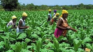 agriculture agro processing investment strategies