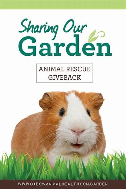 Animal Rescue Nominate Chance Win Favorite