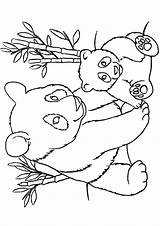 Panda Coloring Pages Printable Bear Manatee Sheets Pandas Animal Colouring Bears Para Colorear Adult Printables Adults Worksheets Books Chinese Osos sketch template