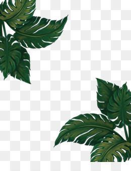 leaves png leaves transparent clipart