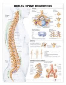 Disease Anatomy Archives