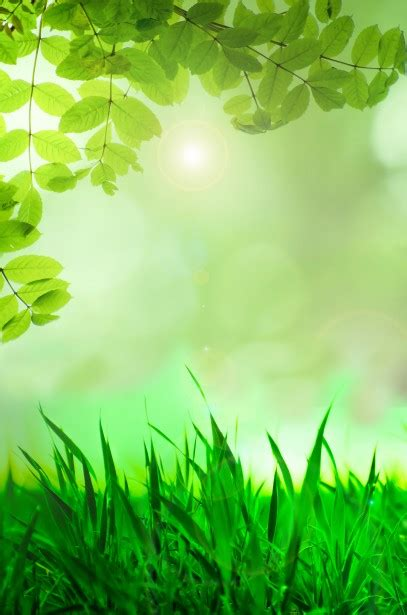 natural green background  stock photo public domain