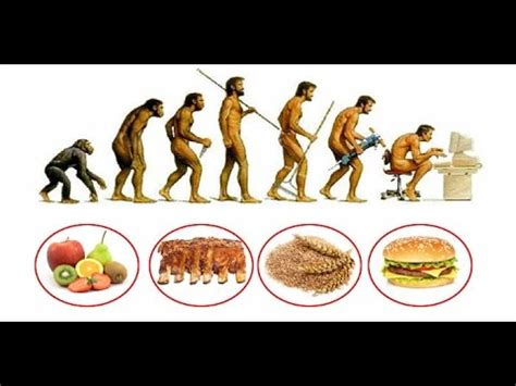 e alimentazione alimentazione ed evoluzione