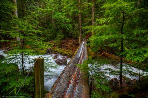 Tlcharger Fond D'ecran Rivière, Forêt, Arbres, Pont Fonds