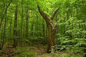 Euxine-colchic Deciduous Forests