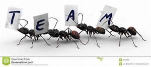 Ameisen In Der Wand : vier ameisen team arbeit der ameisen vier stockfotos bild 9372953 ~ Frokenaadalensverden.com Haus und Dekorationen