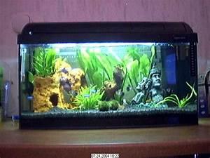 60 Liter Becken : 54l und 25 l aktualiesiert aquarium forum ~ Michelbontemps.com Haus und Dekorationen