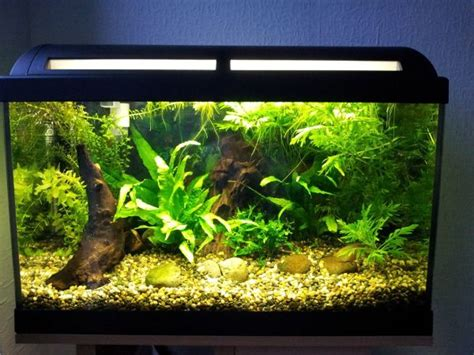 how to spell furniture 28 modern fish tanks that inspire relaxation