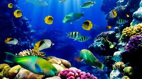 fish ocean seabed tropical reef coral hd wallpaper