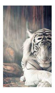 1920x1080 White Tiger Dreamy Laptop Full HD 1080P HD 4k ...