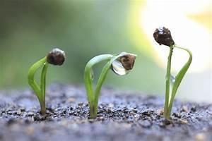 Japanischer Spinat Pflanze : spinat spinacia oleracea gartenzauber ~ Frokenaadalensverden.com Haus und Dekorationen