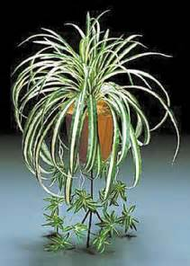 spider plants xing fu plants that can shield us from electromagnetic field