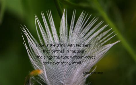 white feather hope quotes quotesgram