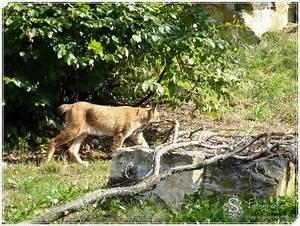 Tierpark Bad Mergentheim : bei den luchsen im tierpark bad mergentheim ~ Eleganceandgraceweddings.com Haus und Dekorationen