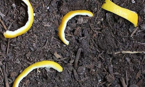 se d饕arrasser des moucherons dans la cuisine les 25 meilleures id 233 es de la cat 233 gorie moucherons plantes