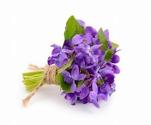 Small Bouquet With Meadow Violets. Stock Image - Image of ...