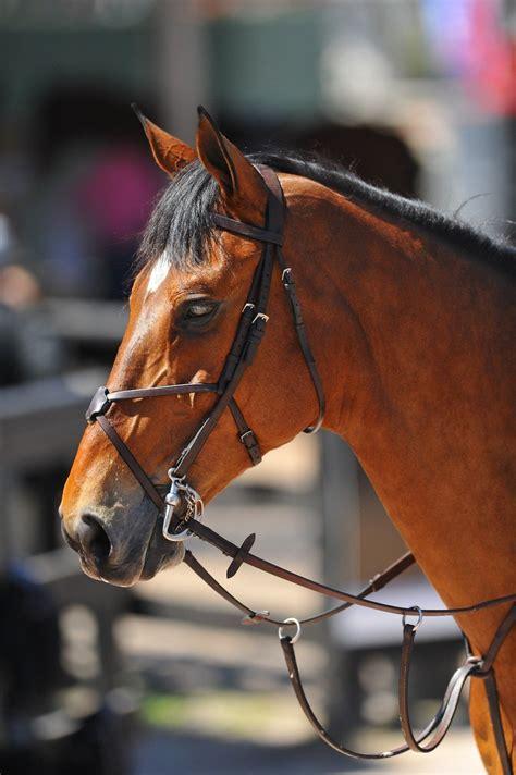 horse kwpn warmblood dutch dressage horses jumping hunter jumper cup dubbeldam breitling jeroen winner ls young noellefloyd