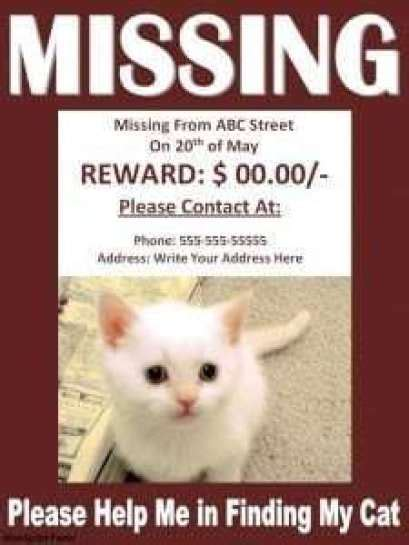 missing cat poster template word excel formats