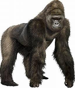 ape vs monkey | Joanna Volavka