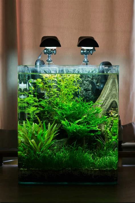 plante pour chambre à coucher idées et astuces comment créer un nano aquarium