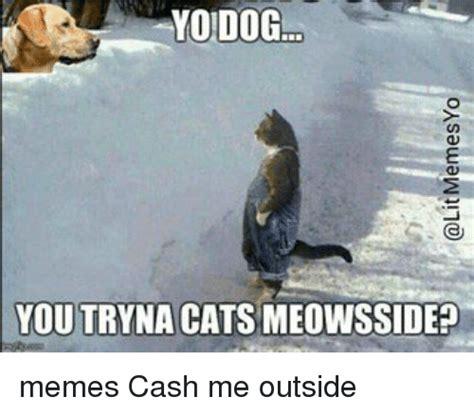 Cash Me Outside Memes - yo dog you tryna cats meowsside memes cash me outside meme on sizzle