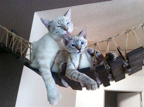 indiana jones the temple of meow portland s cat