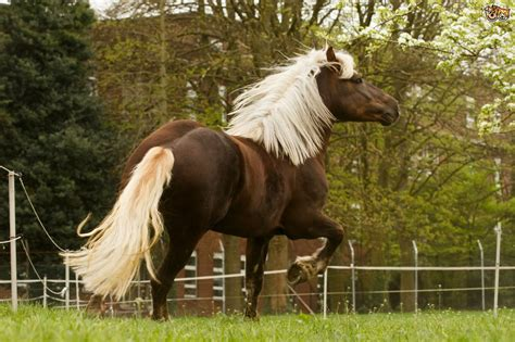 breeds horse horses prettiest rare forest breed these mane nothing seen ever pets4homes chestnut dark flaxen german pet short nature