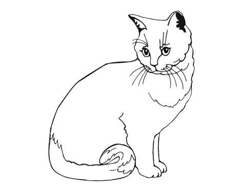 gambar kucing untuk mewarnai
