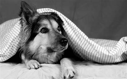 Dog Dogs Wallpapers 4k Fanpop Doggies Animals