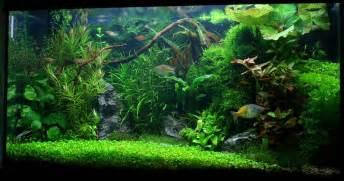 sol aquarium eau douce aquarium eau douce esth 233 tique