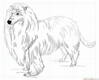 Collie Coloring Rough Pages Draw Border Drawing