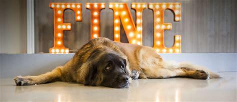 FINE | A Top Digital Branding Agency | San Francisco ...