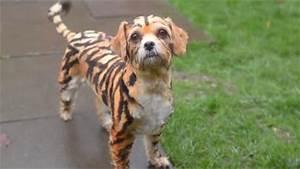 Tiger Dog Hybrid | www.pixshark.com - Images Galleries ...