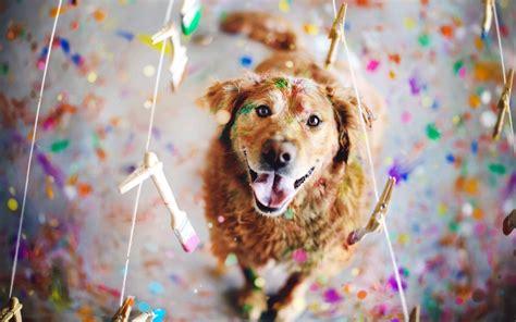 dog pictures   hd desktop wallpapers  hd