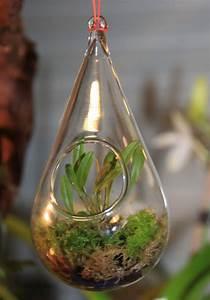 Orchideen Im Glas : mini orchidee in glaskugel orchideenforum ~ A.2002-acura-tl-radio.info Haus und Dekorationen