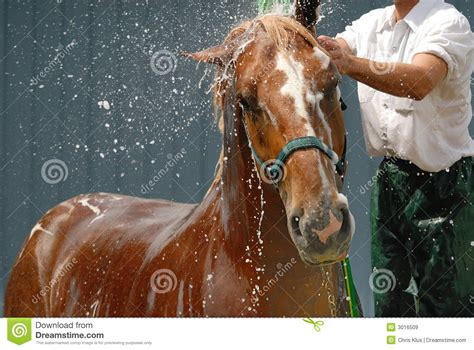equine shower shower stock image image of fair animal nature