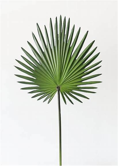 Palm Fan Artificial