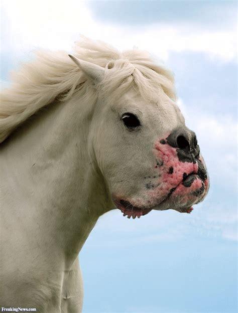 horse mouth dogs hybrid alternative