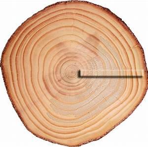 Planche à Dessin En Bois : les bois de l 39 ukul l anatomie de l 39 ukul l ~ Zukunftsfamilie.com Idées de Décoration