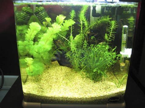 mettre un sol nutritif dans un aquarium en eau